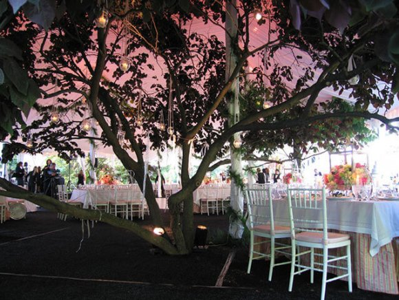 custom-installation-tree-included-in-tent